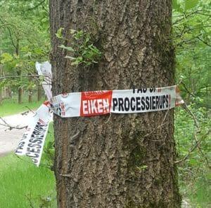 EPR eikenprocessierups, waarschuwing, eiken, Oude Warande
