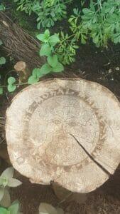 Jasper Griepink, Grove 2.0 - Kapel van de Wilde Wijsheid, boomstam